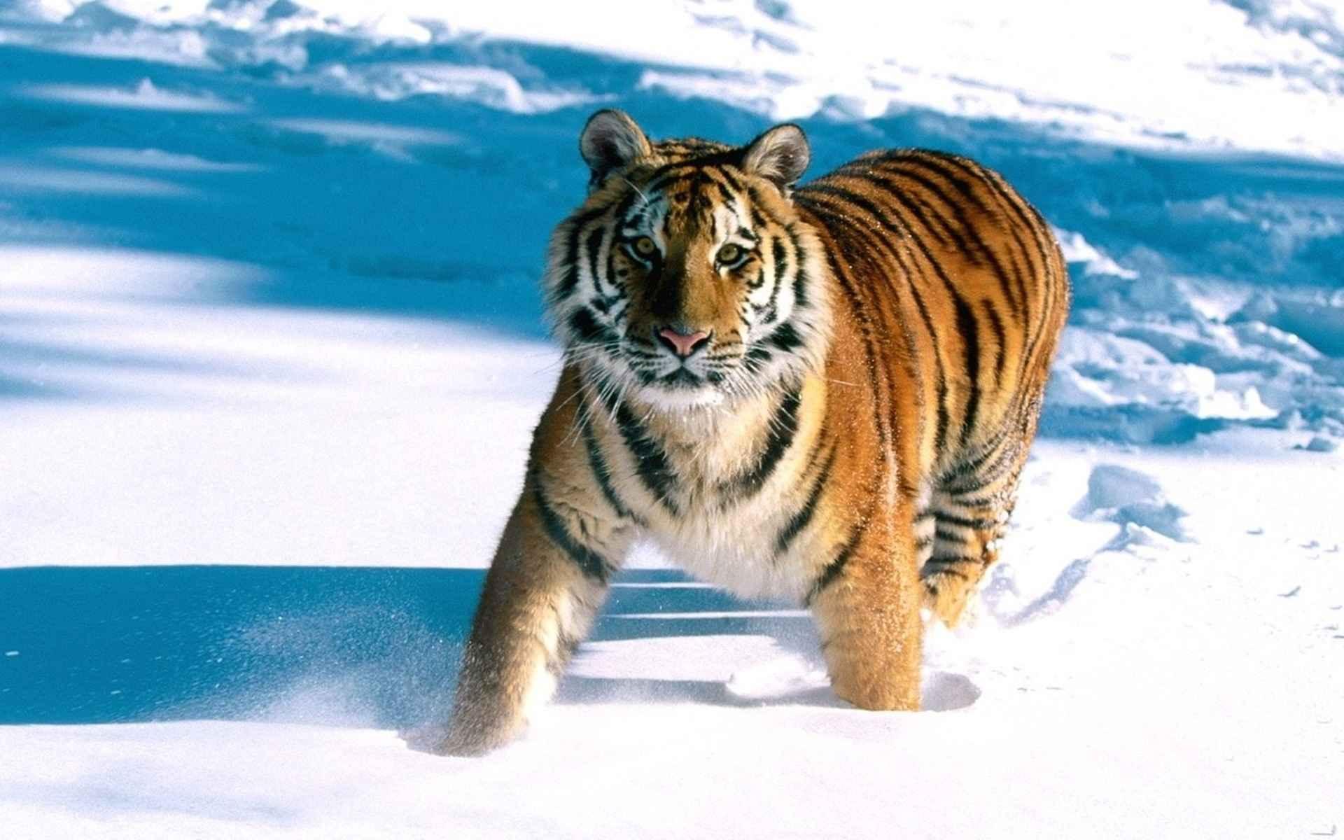 عکس منظره حیوانات